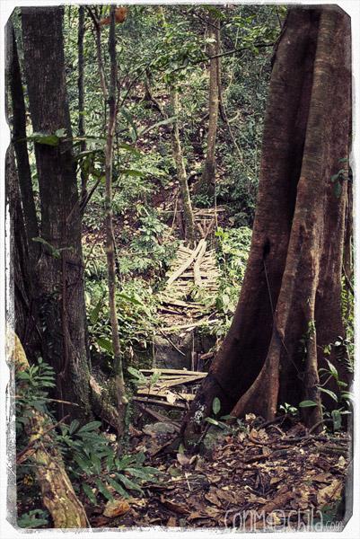 El mejor puente que encontramos en medio de la jungla
