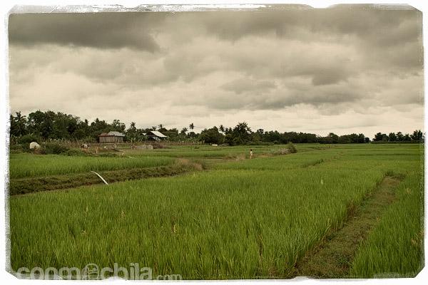 Paisajes de Koh Trong
