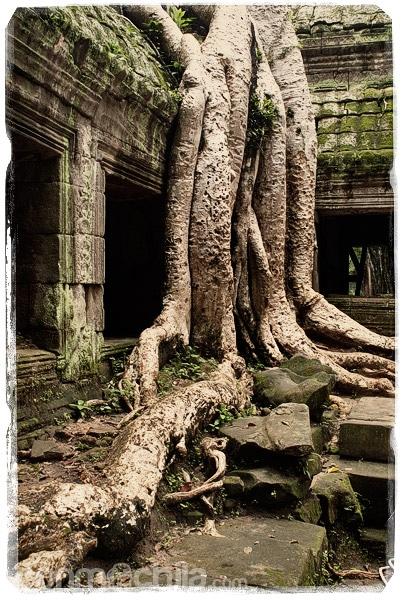 Las impresionantes raíces de los árboles
