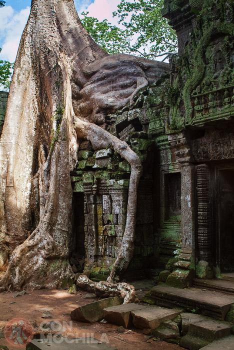 Más raíces engullendo los muros