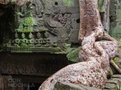 Ta Prohm, el famoso templo devorado por raíces