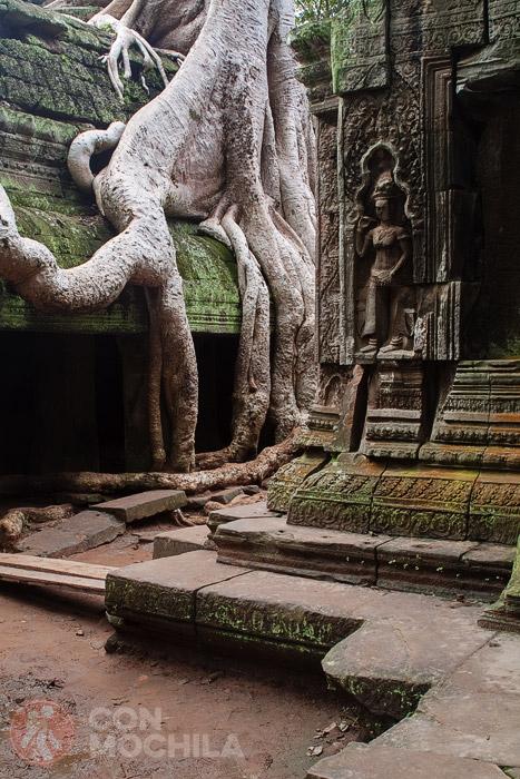 Raíces y templo