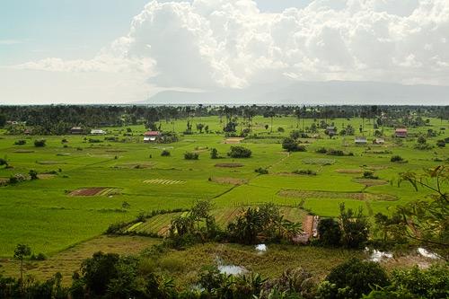 Bello paisaje repleto de campos de arroz