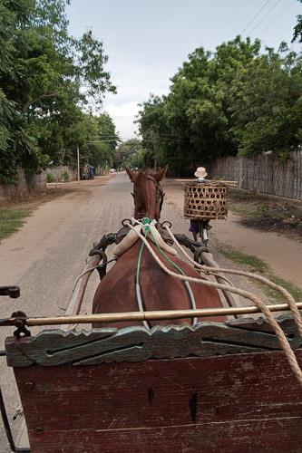 Carro tirado por un caballo en Bagan
