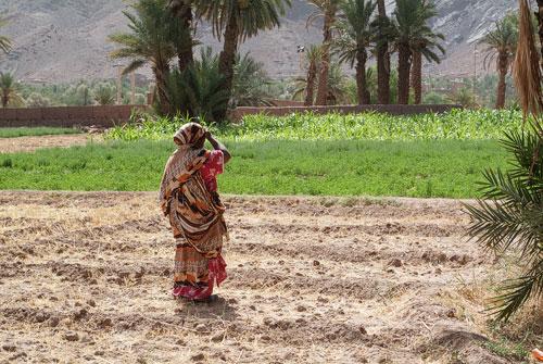 Mujer en el palmeral