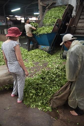 Fábrica de tostado de té