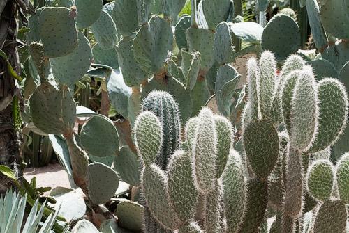 Cactus ante el imponente sol de mediodía