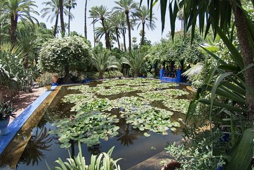 Estanque con plantas acuáticas