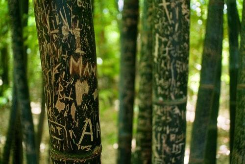 Bambú repleto de leyendas de los visitantes