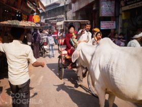 Recuerda contratar un buen seguro de viaje de India