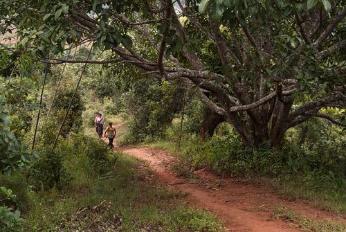 Los senderos de la ruta