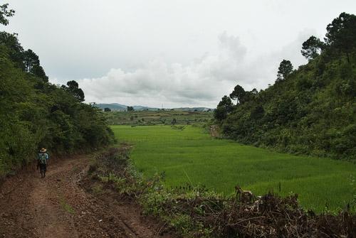 Pequeño arrozal en el valle