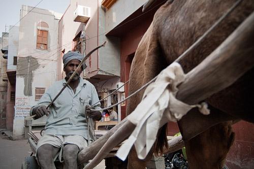 Camellos por las calles