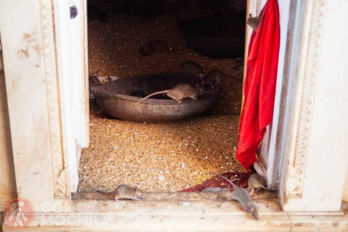 Las primeras ratas en el pasillo de la entrada