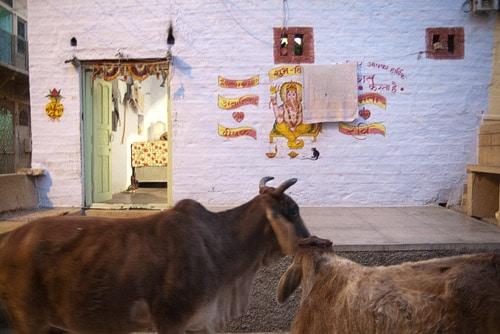 Vacas frente a una bonita vivienda pintada