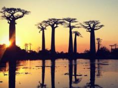 Itinerario de viaje a Madagascar en 22 días – Coral y Blai