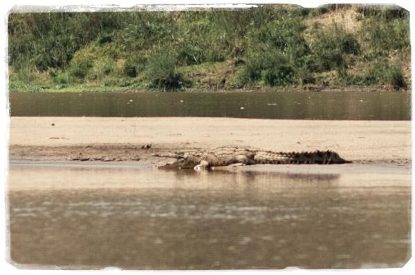 Al final hicimos la foto al cocodrilo