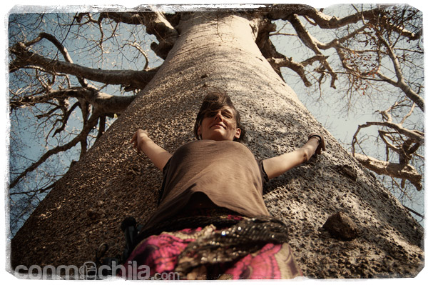 Con el gran baobab