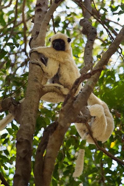 Un par de jóvenes jugando en las ramas