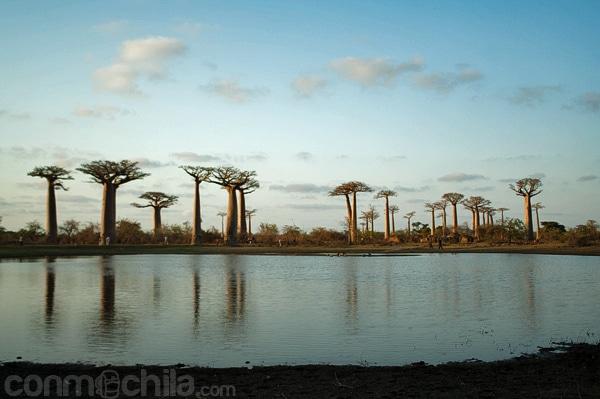 El pequeño lago de la avenida del baobab