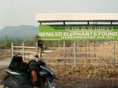 Elephant's World y el elefante asiático (Primera parte)