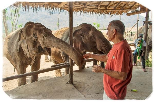 Primer contacto con los elefantes