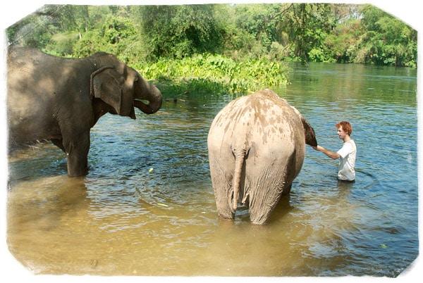 Woody ayuda a su elefanta favorita, Lam Duan