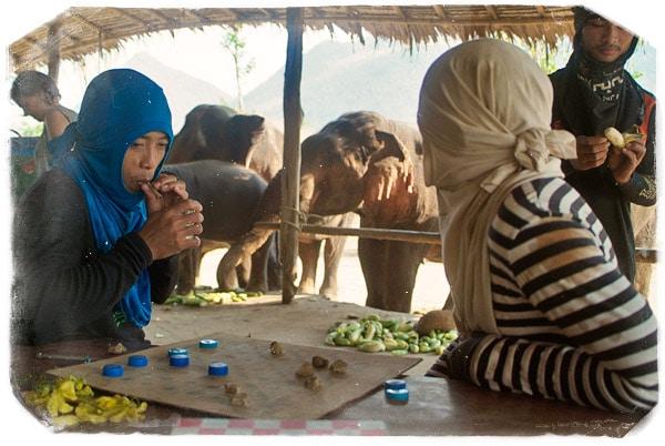Esperando a que los elefantes terminen la merienda