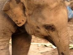Un día cualquiera en Elephant's World (2)