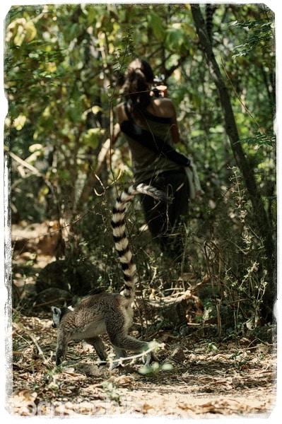 Lemur caminando mientras Carme graba
