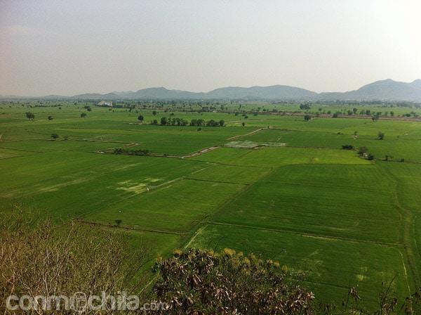 Vistas de los arrozales
