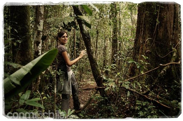 La espesa jungla