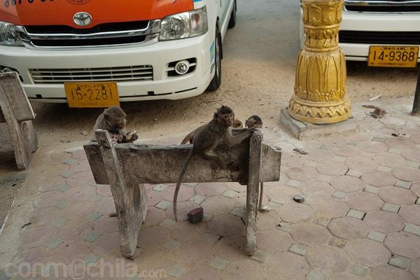 Este es nuestro banco, búscate otro. Imagen típica de Lopburi