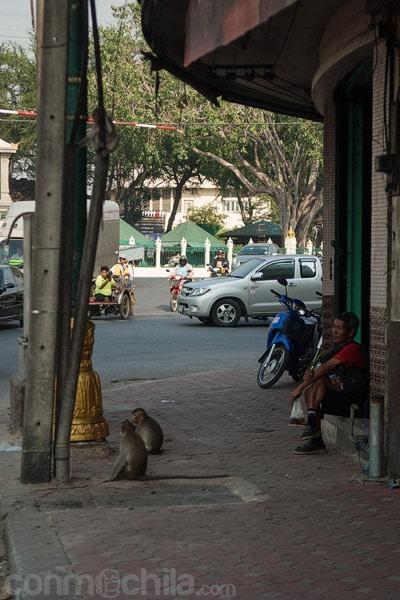 Los monos y la gente local