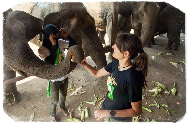 Dando de comer a los elefantes