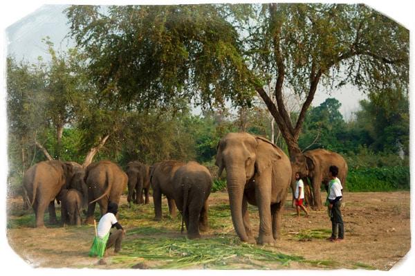 Los increíbles elefantes