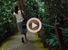 Vídeo 9 Singapur – El jardín botánico de Singapur