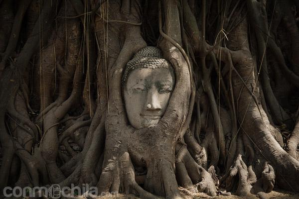 La famosa cabeza entre las raíces de Wat Mahathat