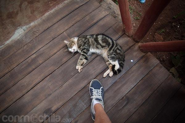 Un gato sin muchas ganas de despertarse