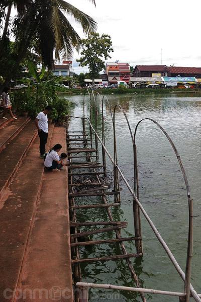 La gente dando de comer a los peces