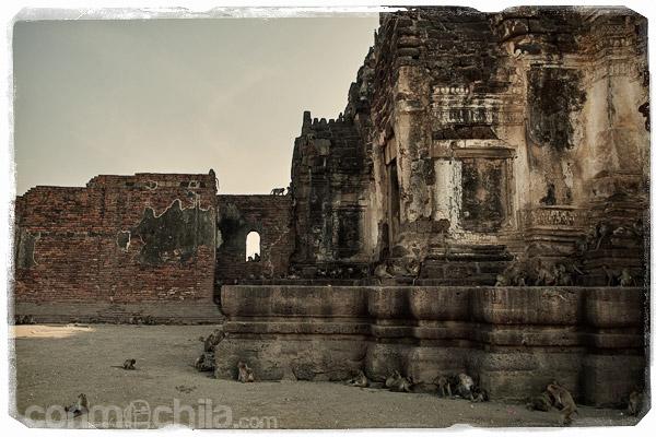 Los monos campando a sus anchas alrededor del templo