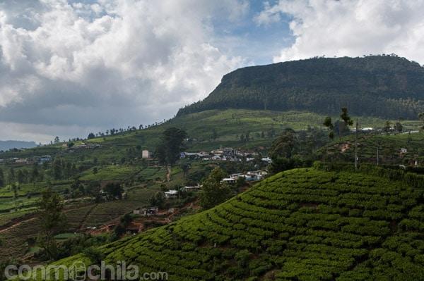 Plantaciones de té de Nuwara Eliya