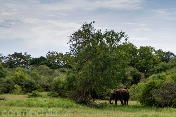 Elefante en el Yala National Park