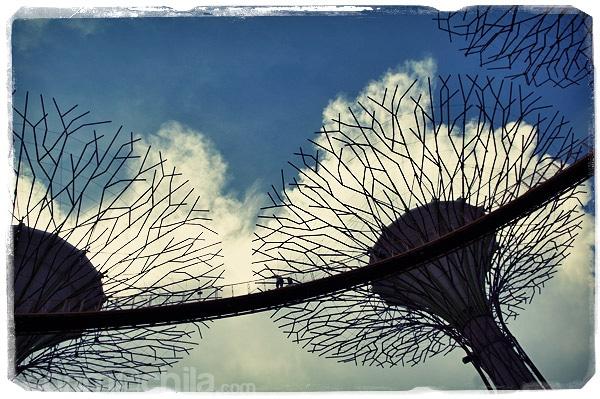 Las pasarelas entre los árboles