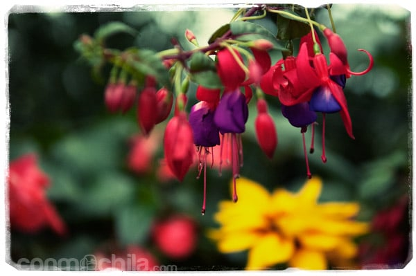 Una de las miles de flores