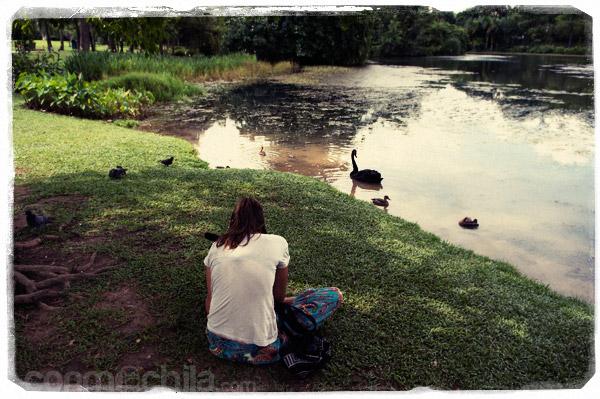 Grabando a los animales del lago