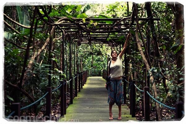 En la pasarela que cruzaba la jungla