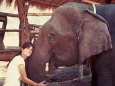 Cap. 17 – Hasta luego Tailandia. Despedida en Bangkok