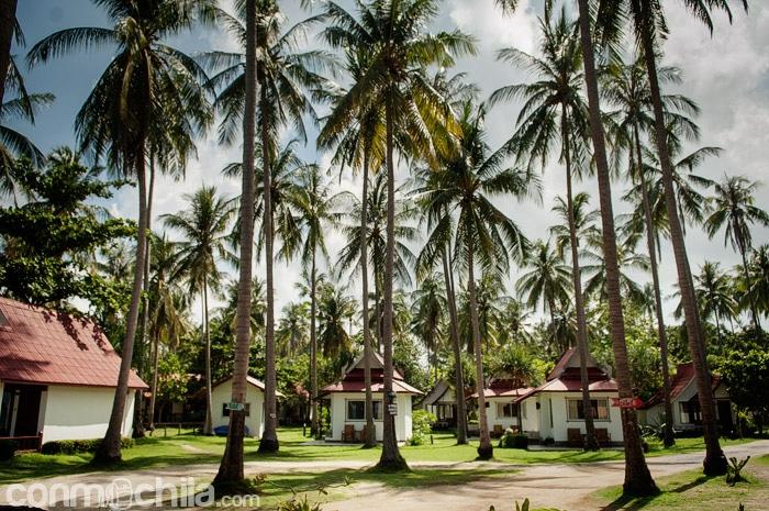 El bonito jardín con los cocoteros de Lantas Lodge