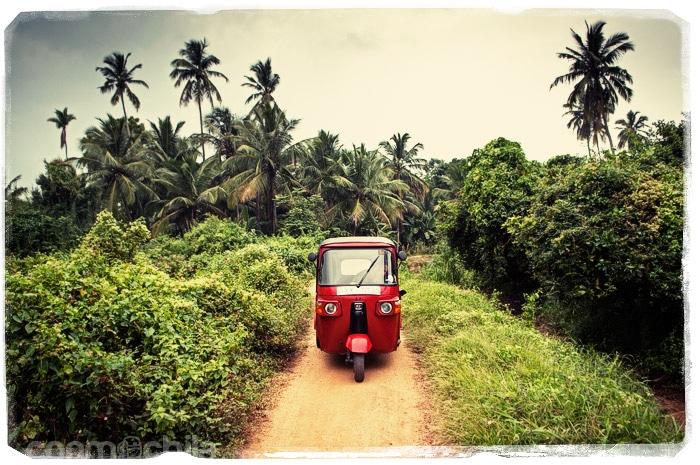 Perdidos entre arroz y cocoteros